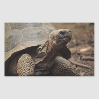 Foto da tartaruga adesivos em formato retangulares