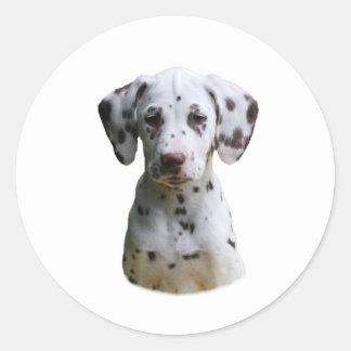 Foto Dalmatian do cão de filhote de cachorro Adesivo Em Formato Redondo