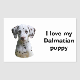 Foto Dalmatian do cão de filhote de cachorro Adesivos Retangulares