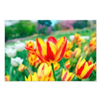 Foto das tulipas
