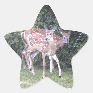 Foto de 2 jovens corças bonitos adesito estrela
