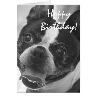 Foto de Boston Terrier Cartão Comemorativo