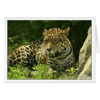 Foto de Jaguar do cartão vazio