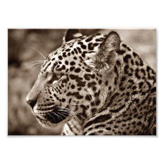 Foto de Jaguar Impressão De Foto
