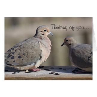 Foto de lamentação da pomba cartão comemorativo