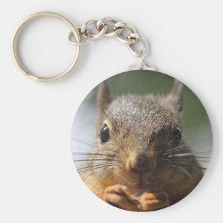 Foto de sorriso do esquilo bonito chaveiros