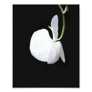 Foto de suspensão da flor branca