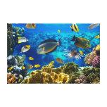 Foto de um peixe tropical em um recife de corais impressão em tela canvas