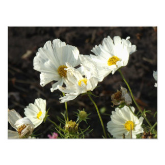 Foto de uma cama de flor do branco e das
