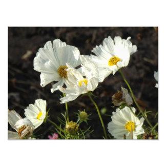 Foto de uma cama de flor do branco e das impressão de foto