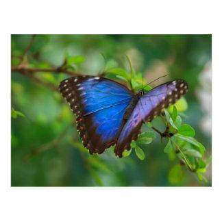 Foto do Auf de Foto da borboleta Cartão Postal
