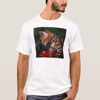 Foto do gatinho do Natal (gato doméstico de Camiseta