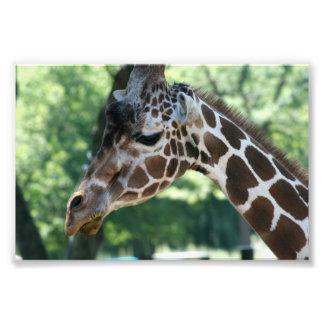 Foto do girafa