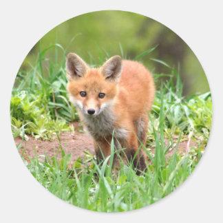 Foto do jogo adorável da raposa vermelha adesivo