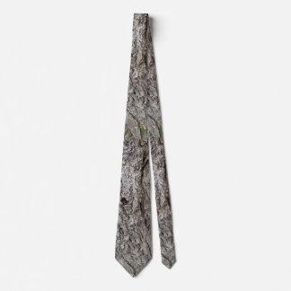 Foto do latido de árvore gravata