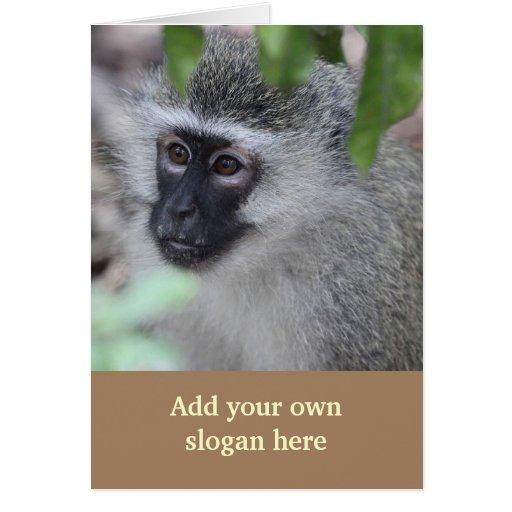 Foto do macaco de Vervet para personalizar-se Cartão