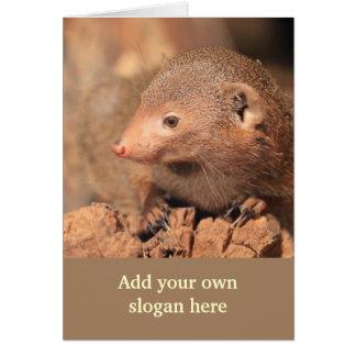 Foto do mangusto para personalizar-se cartão