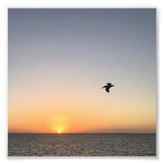 Foto do nascer do sol do pelicano