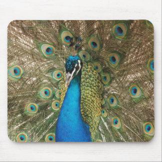 Foto do pavão bonito com penas espalhadas mousepad