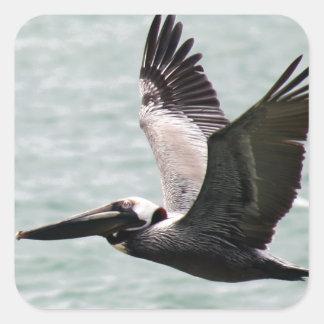 Foto do pelicano adesivo quadrado