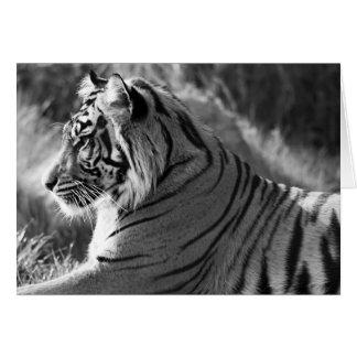 Foto do perfil do tigre de B&W Cartões