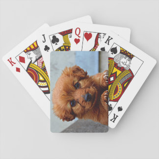 Foto do retrato do filhote de cachorro de Brown Baralhos