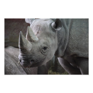 Foto do rinoceronte preto impressão de foto