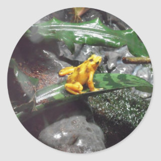 Foto do sapo do dardo do veneno adesivo redondo