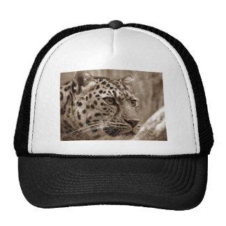 Foto do Sepia HD do close up do leopardo Bonés