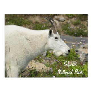 Foto do viagem da cabra de montanha do parque cartão postal