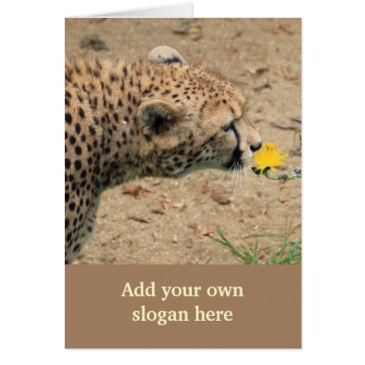 Foto doce da chita para personalizar-se cartão