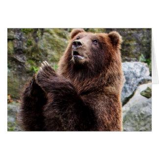 Foto dos animais selvagens do urso de Brown do urs Cartoes