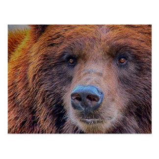 Foto dos animais selvagens do urso de Brown do urs Cartão Postal