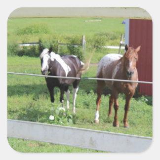 Foto dos cavalos adesivo em forma quadrada