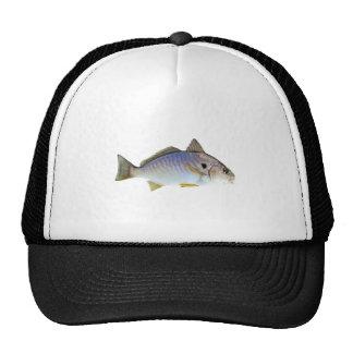 Foto dos peixes do ponto boné