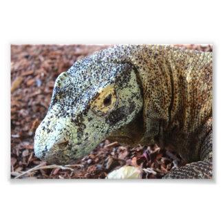 Foto Dragão de Komodo