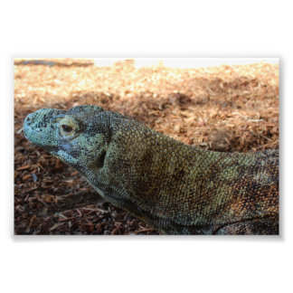 Foto Dragão de Komodo apenas que refrigera!