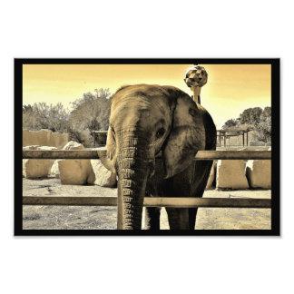 Foto Elefante do jardim zoológico de Riyadh