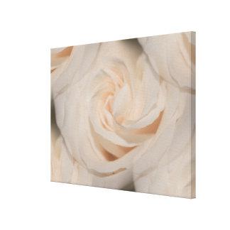 Foto elegante romântica da colagem dos rosas branc impressão em tela