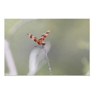 Foto empoleirando-se da libélula