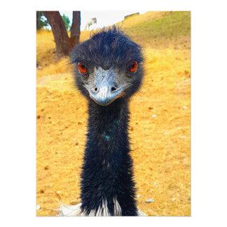 Foto Emu