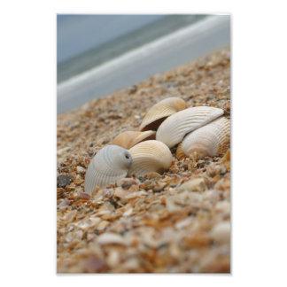 Foto Escudos do mar na aparência imaginativa da