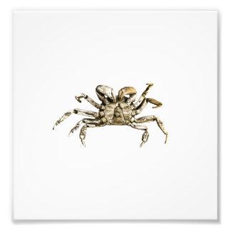 Foto escura do caranguejo impressão de foto