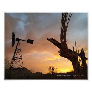 Foto Esqueleto do cacto do moinho de vento e do Saguaro