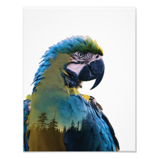 Foto Exposição dobro do papagaio