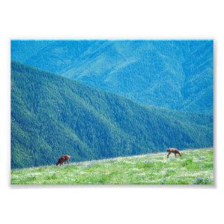 Foto Fanfarrões pelas montanhas