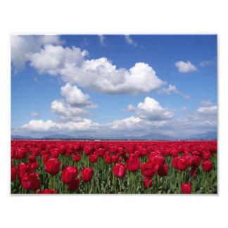 Foto Festival da tulipa