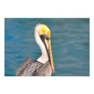 Foto Fim do retrato do pelicano acima com o oceano no