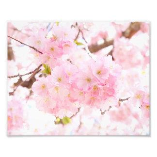 Foto Flor de cerejeira cor-de-rosa de Sakura da árvore