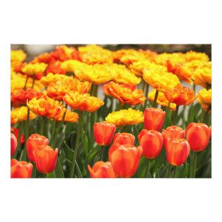 Foto Flores bonitas do primavera